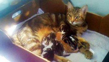 ¿Cómo proceder a la recepción de un gato, y que la necesidad de este?