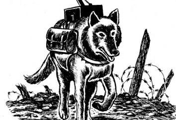 Psy w Wielkiej Wojny Ojczyźnianej. psy wyczyny podczas Wielkiej Wojny Ojczyźnianej