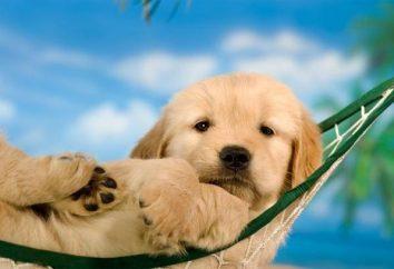 Determinamos la edad de los perros en términos humanos
