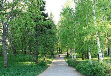 Kirov: Alexandrovsky Garden i jego funkcje