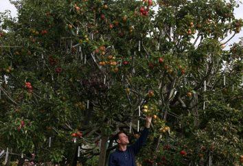 In erba alberi da frutto. Consigli giardinieri