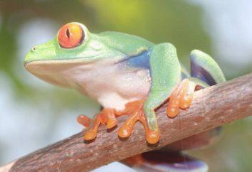 Adaptación de los organismos al medio ambiente. La adaptación de los seres vivos: ejemplos