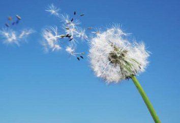 Was ist Luft? Luftfeuchtigkeit und Lufttemperatur