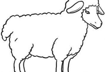 Wie ein Schaf in Stufen ziehen?
