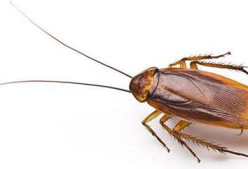 Os insetos domésticos mais contrárias: insetos, baratas, aranhas, formigas. os métodos de controlo e de prevenção