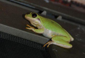 Żaba żyjąca w domu: znaki, ciekawe fakty
