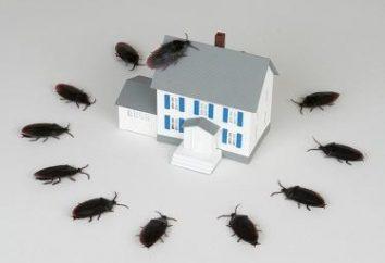 des moyens fiables de blattes acide borique
