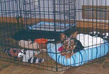 Woliera w mieszkaniu dla psa. Zawartość psów w domu