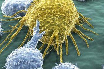 Leucocytaire – il … le nombre de globules blancs: la norme