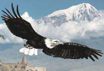 Eagle: Jak narysować majestatyczny ptak