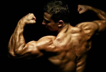 Hypertrophie des muscles humains: Causes