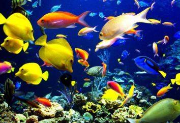 Classificazione dei pesci: la base della tassonomia ed esempi