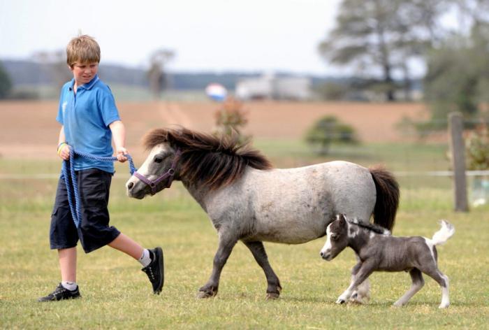 Kleinste Pferderasse Der Welt Kaufen