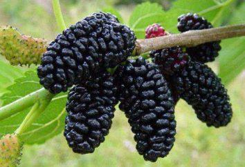 Krym: owoce w czerwcu, lipcu. Nazwa lista i opis właściwości