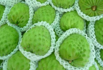 jabłko cukier (owoc): właściwości użytkowe i kaloryczne