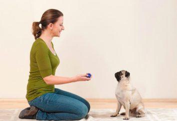 Clicker pies: używać podczas treningu. Liczba właścicieli