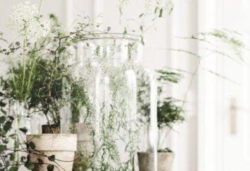Che la casa era calda e accogliente: coltivare fiori di felicità