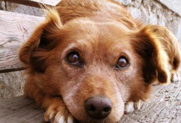Royal Canin Gastro Intestinal – potrawy na specjalną dietę