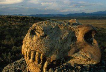 Grande extinção do Permiano de espécies: possíveis causas