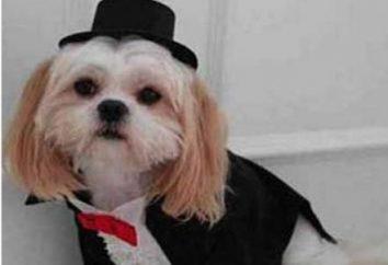 Sognato di un cane – dare un'occhiata alla interpretazione dei sogni!