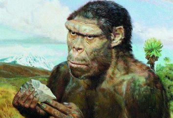 Archanthropines – es un precursor temprano del hombre moderno