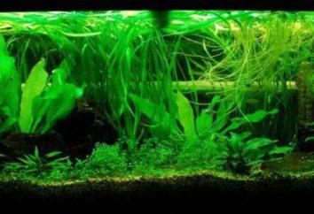 Nicienie w akwarium: przyczyny, sposoby walki i ciekawostki