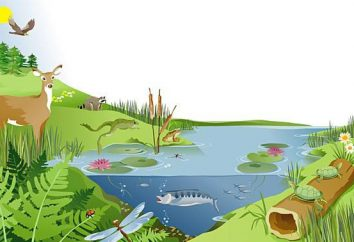 Jak ludzie używają jeziora ekosystemów w tej chwili?