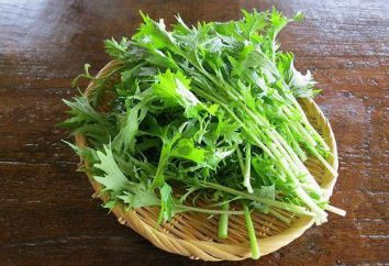 """Japońska kapusta """"mizuna"""": opis, cechy uprawy i stosowania"""