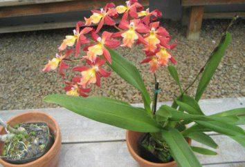 Posso tenere la casa delle orchidee: segni e superstizioni