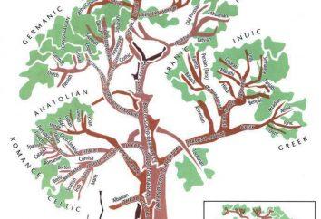 Albero genealogico delle lingue indoeuropee: esempi, gruppi linguistici, in particolare