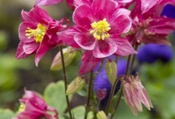 Sump – un fiore nella vostra zona