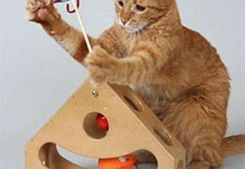 Zabawki dla kotów w Internecie – zabawy dla zwierzaka