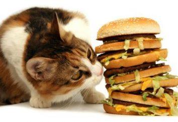 Wybór jedzenia dla kotów. Jaki jest najlepszy rodzaj żywności?
