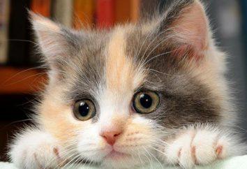 Probiotyki dla kotów: lista leków. Karma dla kotów z probiotyków