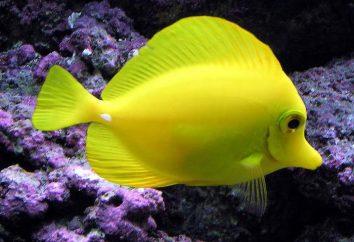 Les noms pour les poissons – comment choisir?