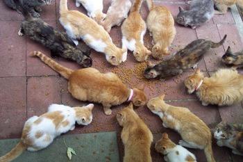 Perché il sogno di molti gatti? Che cosa fa questo libro dei sogni?