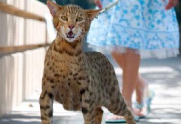 Cat Usher – Mito o Realtà sensazionale?