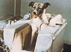raça do cão que foi lançado em órbita e as razões para esta escolha