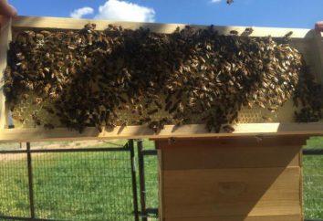 Maladies des abeilles et leur traitement. désinfection des ruches