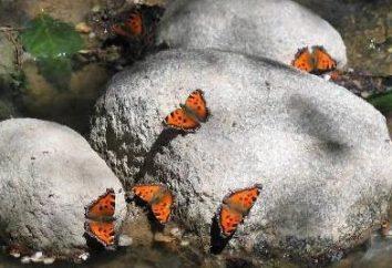 Vallée des Papillons, Rhodes – l'endroit le plus romantique de la planète