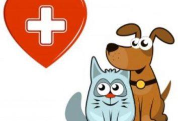 Padaczka u kotów: Przyczyny, objawy, leczenie