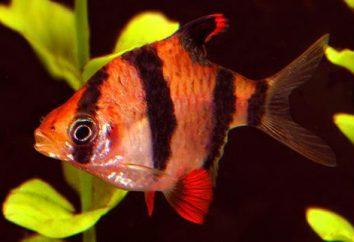 Ryby akwariowe: tytuł, opis i treść