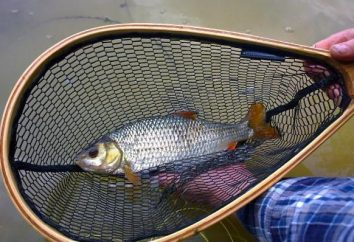 Attraper le polystyrène: en particulier la pêche, du matériel, des secrets et des conseils
