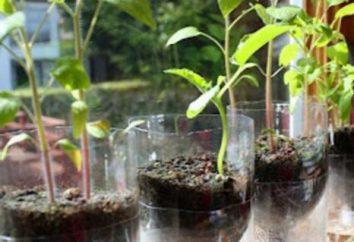 Pot con irrigazione automatica – un grande aiuto nella coltivazione dei fiori