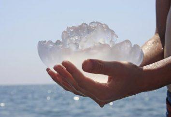 Quelle est la méduse la plus toxique dans le monde?