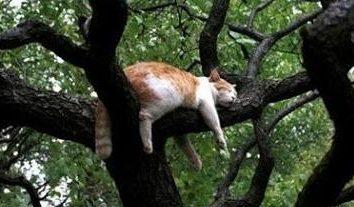 Dlaczego koty mruczą – czy naprawdę jest to, aby manipulować ludźmi?