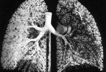 Organy oddychania człowieka. Struktura i funkcja układu oddechowego