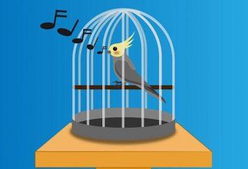 Klatka z rękami do papuga. Jak zrobić klatkę papugi