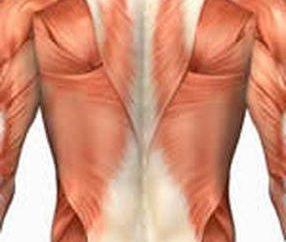Begradigung der Wirbelsäule Muskel: Funktionen und Stärkung