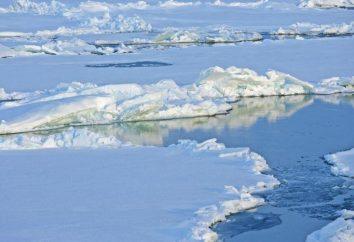 Des différences importantes dans l'Arctique et l'Antarctique: Description et caractéristiques